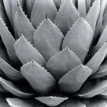 Tablou canvas - Floare 03