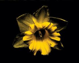 Tablou canvas - floare 04