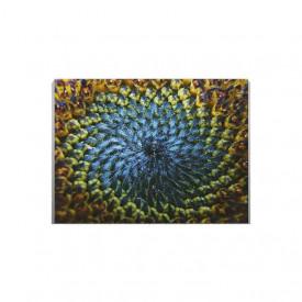 Tablou Canvas Natural Spiral