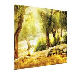 Tablou canvas - raze de soare in padure