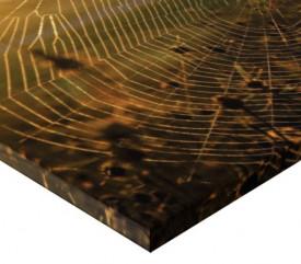 Tablou canvas - panza de paianjen