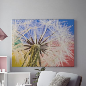 Tablou Canvas Dandelion Close-Up