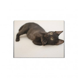 Tablou Canvas Little black cat