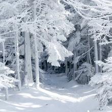 Tablou canvas - padurea iarna