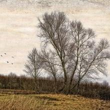 Tablou canvas efect painting - copaci