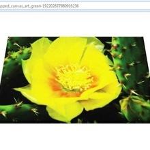 Tablou canvas - floare de cactus