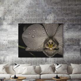 Tablou Canvas Orhidee neagra