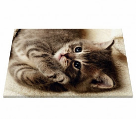 Tablou canvas - Pisici 02