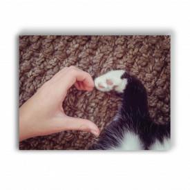 Tablou Unconditional love (for pets)