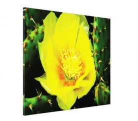 Tablou canvas - floare de cactus