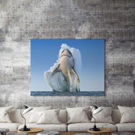 Tablou Canvas Marele rechin alb
