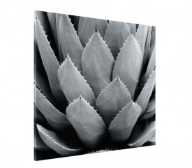 Tablou canvas - floare 03