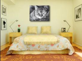 Tablou canvas - pisica