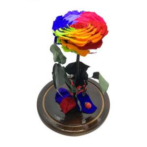 Trandafir Criogenat XXL in cupola de sticla