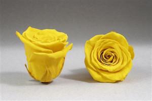 Aranjament trandafiri criogenati pe pat de licheni stabilizati in cutie tip carte