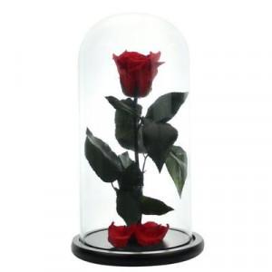 Trandafir Criogenat in cupola de sticla cu blat negru, pe pat de petale