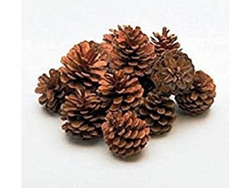 Poze Conuri de pin mari - punga 25 buc