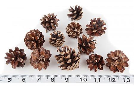 Conuri de pin mini - punga 100 buc