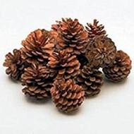 Conuri de pin mari - punga 25 buc