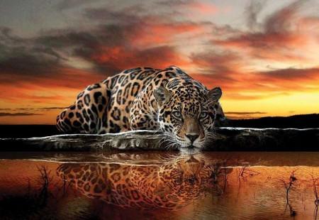 Panthera (jaguar), animal poster - 126