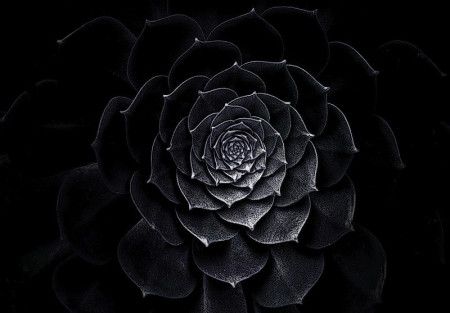 Iron lotus flower, black and white image - 13483