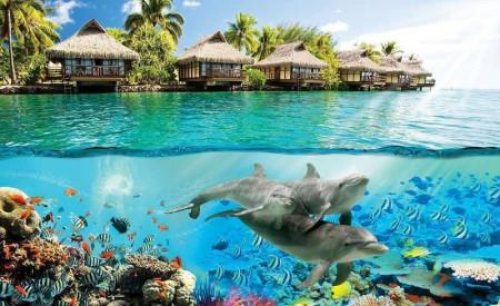 Underwater life coral reef wall mural - 3193
