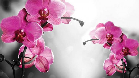 Pink blossomed twigs, relaxing wall mural -1034