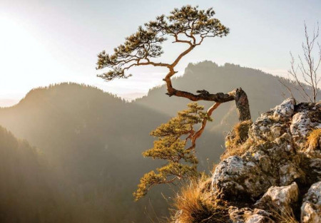 Lonely tree, mountain landscape in the background - 10511