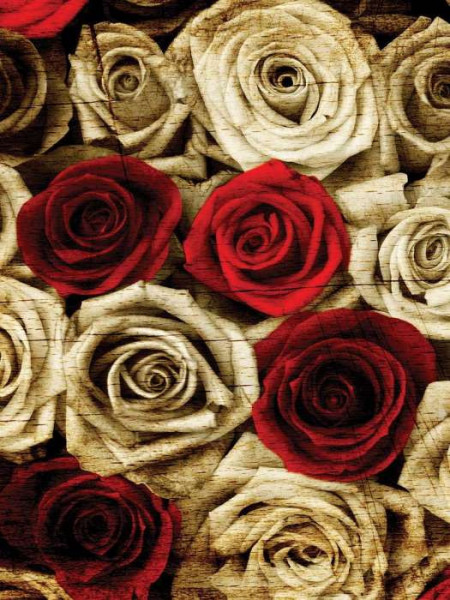 Red and white roses photowall - 3101A