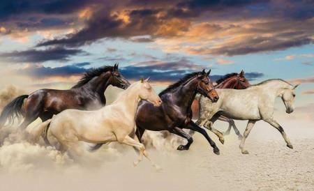 Running wild horses, wall murals of animals - 2964