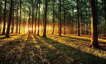 Sun beams breaking through the forest - 2226