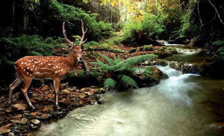 Hind by the river, wild animals wall murals- 147