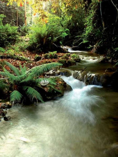 Streamlet in the forest green wallpaper - 147A