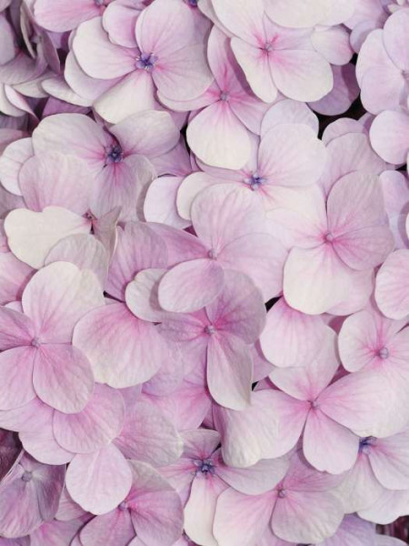 Tender pink orchids, fresh living room wall mural - 3103A