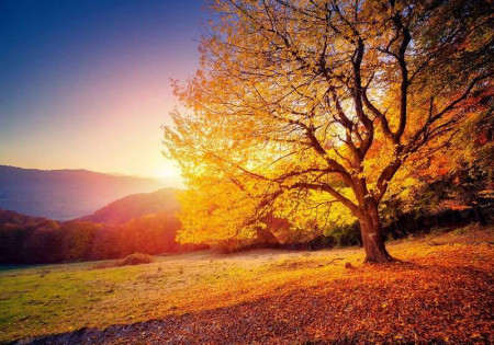Autumn forest with falling leaves, colorful wallpaper - 12640