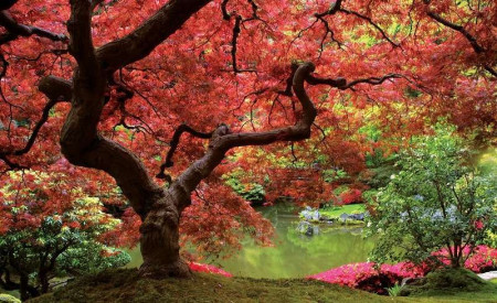 Autumn tree in a lake garden wall poster - 270