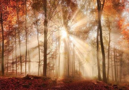 Sunbeams through the autumn forest wallpaper - 10471
