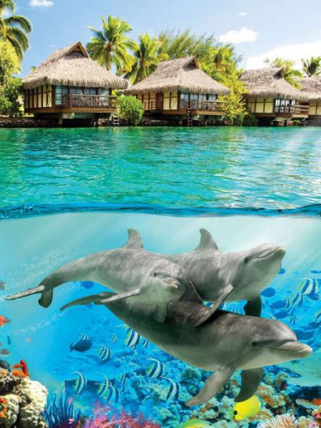 Under the water wall poster, dolphins - 3193A