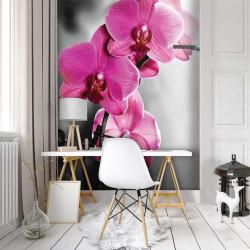 Pink orchids wallpaper - 10155A