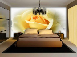 Beautiful single yellow rose wall mural -1569
