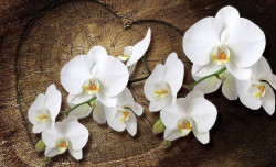 Love message with orchids wallpaper -1014
