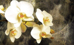 yellowish orchids design wall decal - 2948