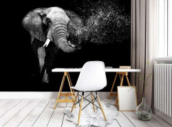 African Elephant, black and white image - 11769