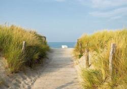 Beach path photo wallpaper - 11844