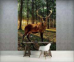 Deer closeup image, wild animals wall mural - 3194A
