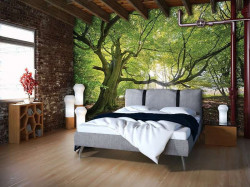 Green trees in a sunny wheather wall mural - 11799