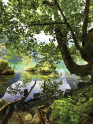 Tree by the lake green nature wallpaper - 10222A