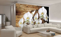 White orchids wallpaper -1017