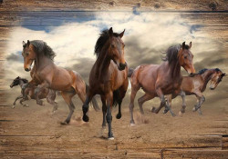 Free running horses, wild animals wall paper - 10083A