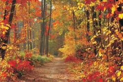 Autumn forest path wallpaper - 4-002